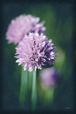 Photograph - Chives At Attention by Crystal Wightman