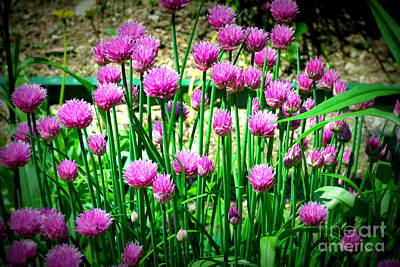 Chives Art Print by Christy Beal