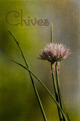 Photograph - Chives by Wayne Meyer