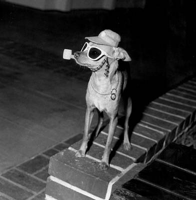 Sunglasses Photograph - Chiwawa With A Pipe by Retro Images Archive