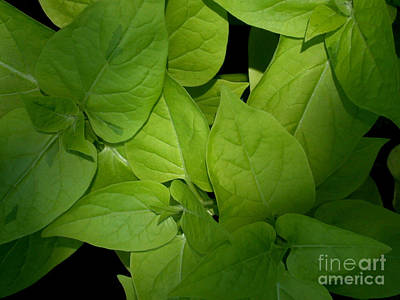 Photograph - Chlorophyll  by Living Color Photography Lorraine Lynch