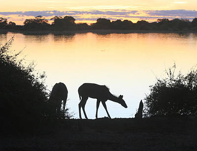 Photograph - Chobe River At Sunset by Karen Zuk Rosenblatt