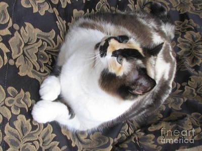 Of Calico Cats Photograph - Chocolate Calico Foundation Girl   Silktapestrycatstm by Pamela Benham