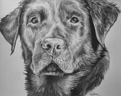 Chocolate Lab Drawing - Chocolate Labrador by Danielle Rosalie Pellicci