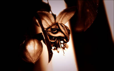 Chocolate Silk Fuchsia Art Print by Jeanette C Landstrom
