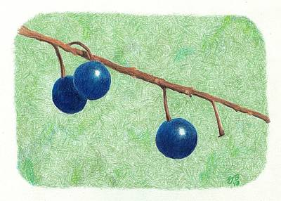 Drawing - Choke Cherry by Sheila Byers