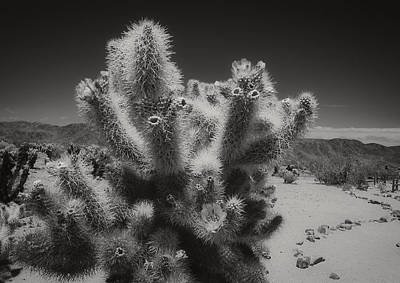 Photograph - Cholla Up Close And Personal by Sandra Selle Rodriguez