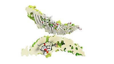 Cholesteryl Ester Transfer Protein Art Print by Ramon Andrade 3dciencia