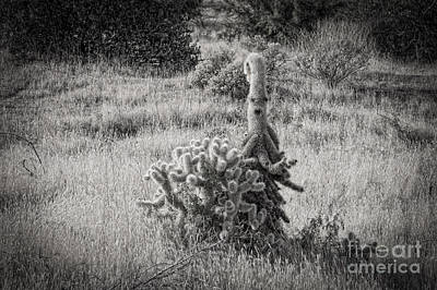Photograph - Cholla Alien by Marianne Jensen