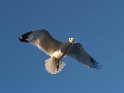 Photograph - Cholla Bay Gulls 18 by Jeff Brunton