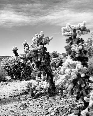 Featured Images Photograph - Cholla Bw Palm Springs by William Dey