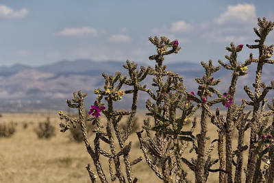 Photograph - Cholla Cactus And Jemez Mountains 1 - Santa Fe New Mexico by Brian Harig