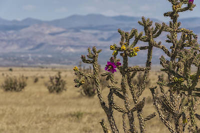 Photograph - Cholla Cactus And Jemez Mountains 2 - Santa Fe New Mexico by Brian Harig