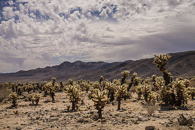Photograph - Cholla Cactus Garden by Lee Kirchhevel