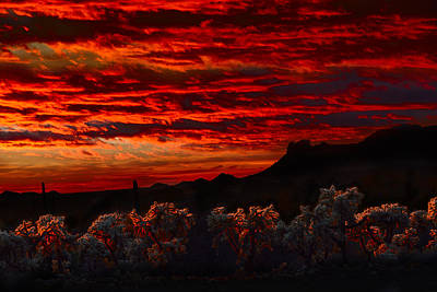 Photograph - Cholla Cactus On Fire by Walt Sterneman