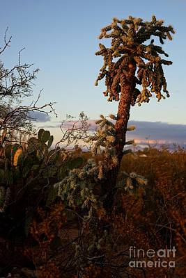 Photograph - Cholla Cactus View by Kerri Mortenson