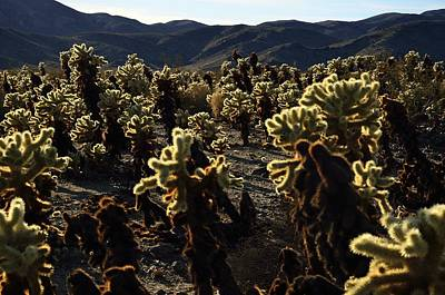Photograph - Cholla Garden by Walt Sterneman