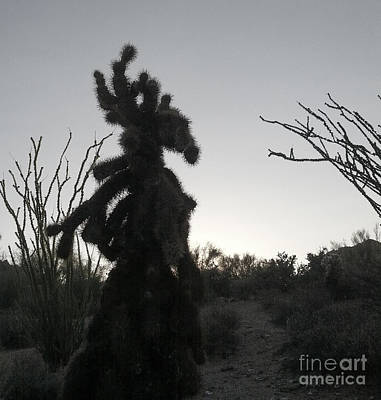 Photograph - Cholla Moose by Marianne Jensen