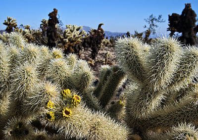 Photograph - Cholla Up Close by Sandra Selle Rodriguez