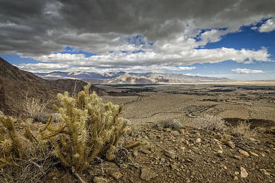 Photograph - Cholla View by Dave Hall