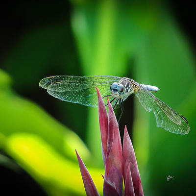 Photograph - Chomped Wing Squared by TK Goforth