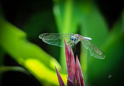Photograph - Chomped Wing by TK Goforth