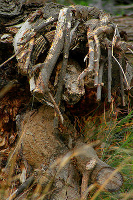 Photograph - Chopped Wood by Doc Braham