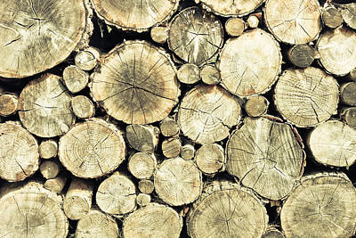 Deforestation Photograph - Chopped Wood by Tom Gowanlock
