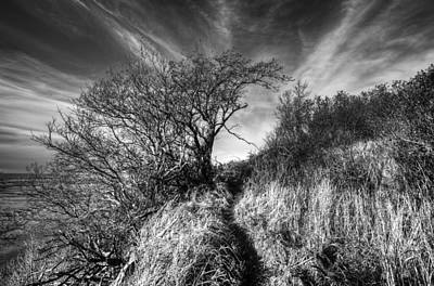 Photograph - Chosen Path by Ted Raynor