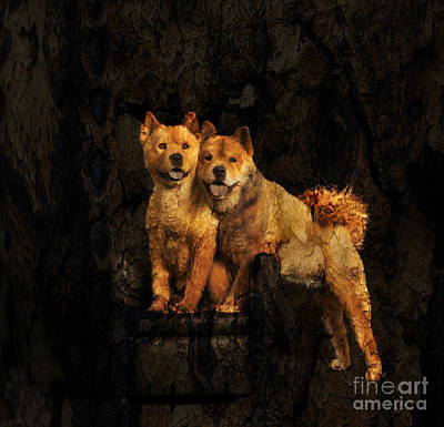 Photograph - Chow Chow by Richard Mason