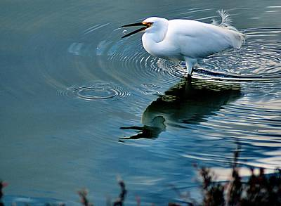 Alviso Photograph - Chow Down by Bob Wall