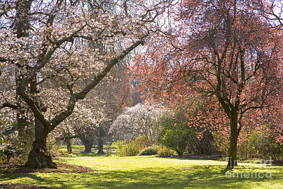 Christchurch Blossom In Hagley Park Print by Colin and Linda McKie
