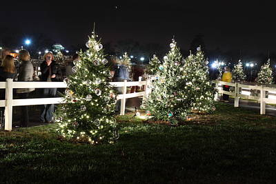 Silhouette Photograph - Christmas At The Ellipse - Washington Dc - 01133 by DC Photographer