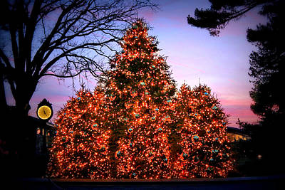 Art Print featuring the photograph Christmas At The New York Botanical Garden by Aurelio Zucco