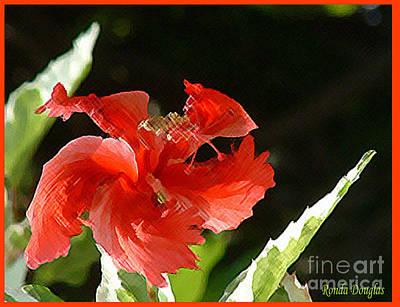 Photograph - Christmas Blossom by Ronda Douglas