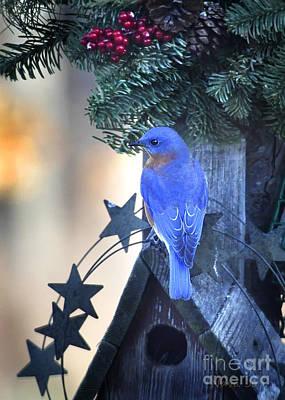 Christmas Bluebird Art Print