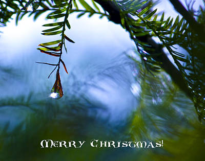 Photograph - Christmas Branch Greeting Card by Mark Andrew Thomas