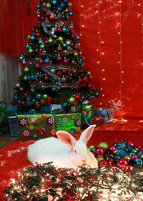Photograph - Christmas Bunny by Amanda Stadther