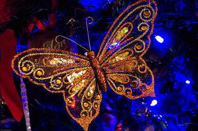 Photograph - Christmas Butterfly by Mick Anderson