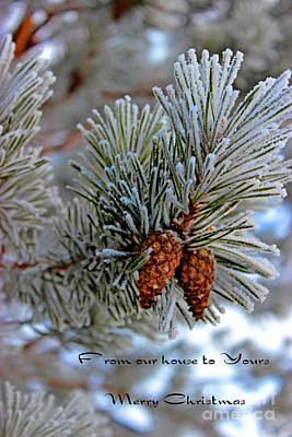 Pine Cones Photograph - Christmas Card 2013 Two by Al Bourassa