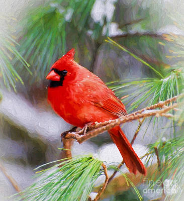 Photograph - Christmas Cardinal - Male by Kerri Farley