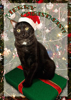 Pet Photograph - Christmas Cat by Adam Romanowicz