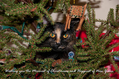Photograph - Christmas Cat by Guy Whiteley