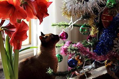 Cat Photograph - Christmas Cat by Samantha Mattiello