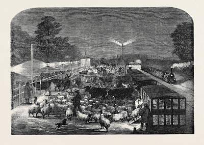 Christmas Cattle Arriving At Tottenham Station Art Print
