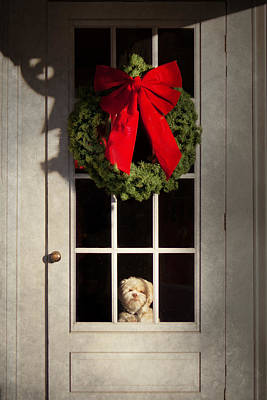 Christmas - Clinton Nj - Christmas Puppy Art Print by Mike Savad
