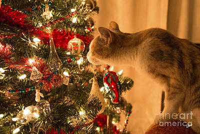 Photograph - Christmas Curiosity  by Alana Ranney