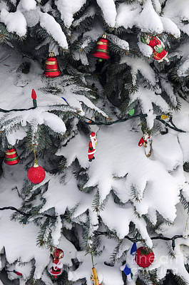 Red Ball Photograph - Christmas Decorations On Snowy Tree by Elena Elisseeva