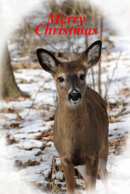 Christmas Deer Art Print
