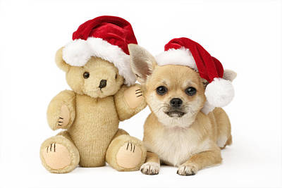 Christmas Dog And Teddy Print by Greg Cuddiford